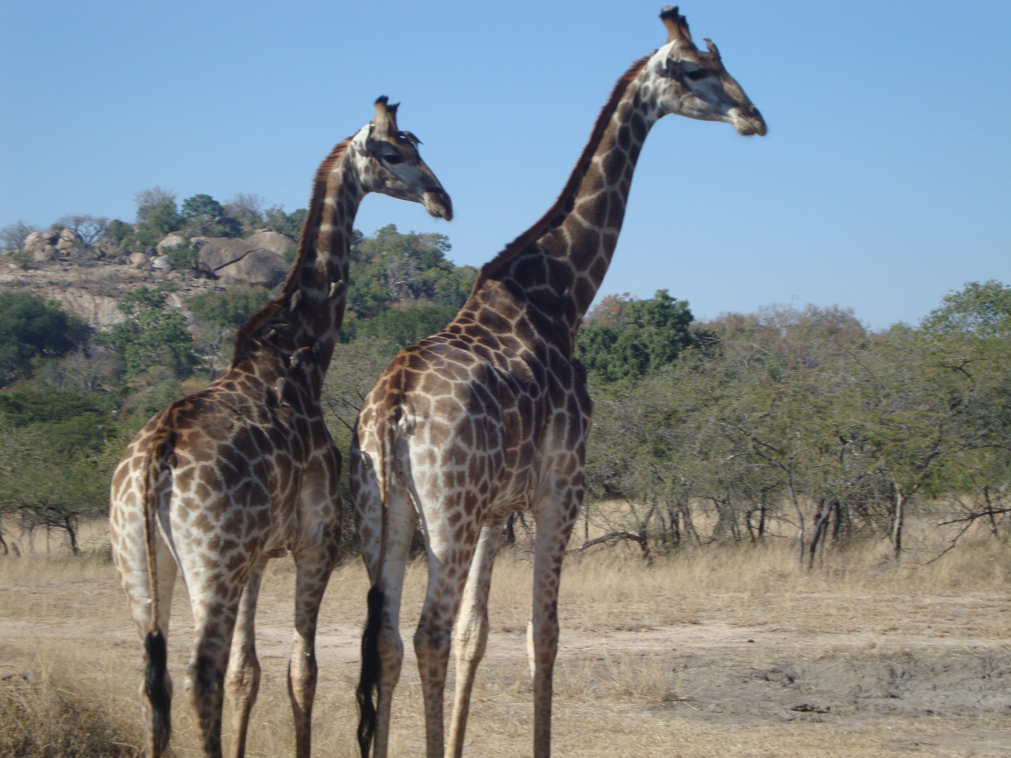 Cape Town & Kruger National Park